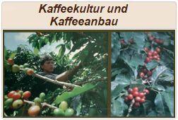 Informationen zu Kaffeekultur und Kaffeeanbau.