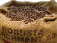 Robusta Kaffeebohnen als Rohkaffee.